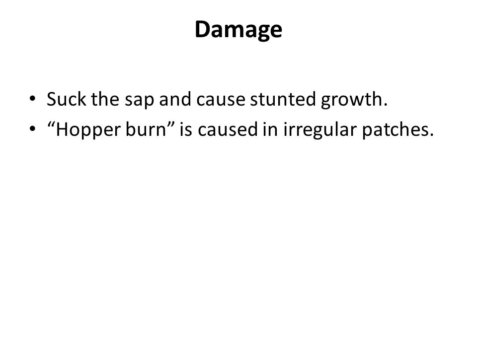 Damage Suck the sap and cause stunted growth.