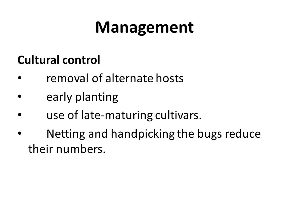 Management Cultural control removal of alternate hosts early planting