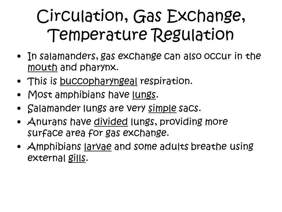 Circulation, Gas Exchange, Temperature Regulation