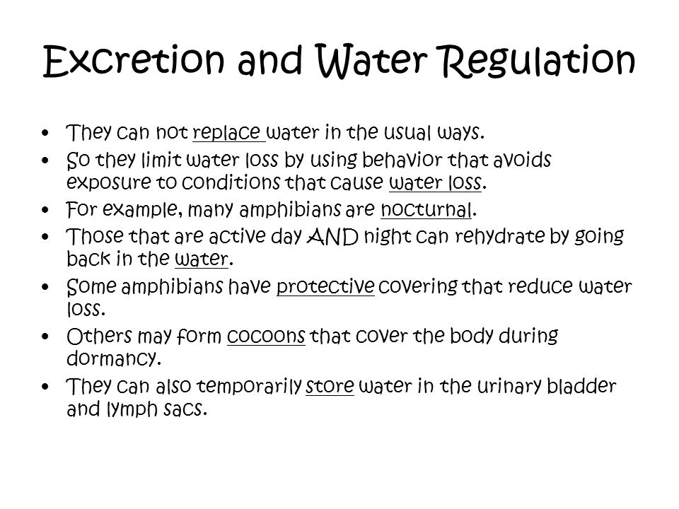 Excretion and Water Regulation