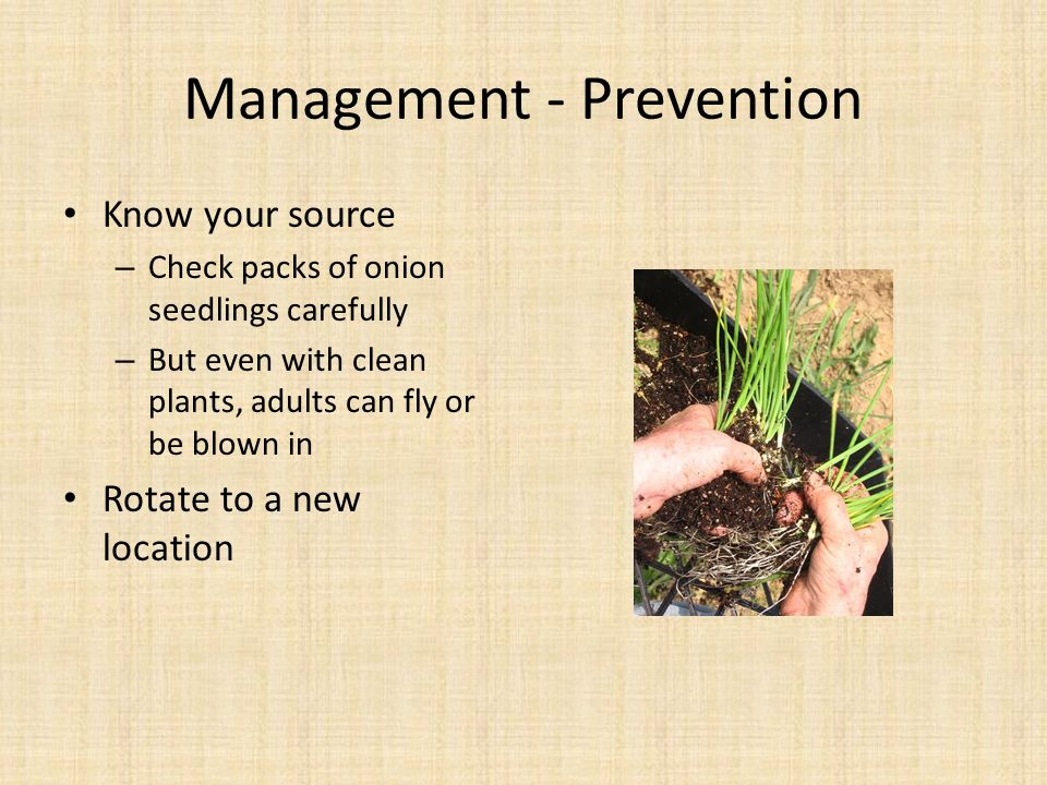 Management - Prevention