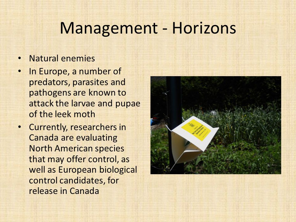 Management - Horizons Natural enemies