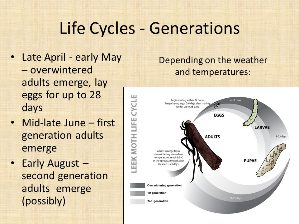 Life Cycles - Generations