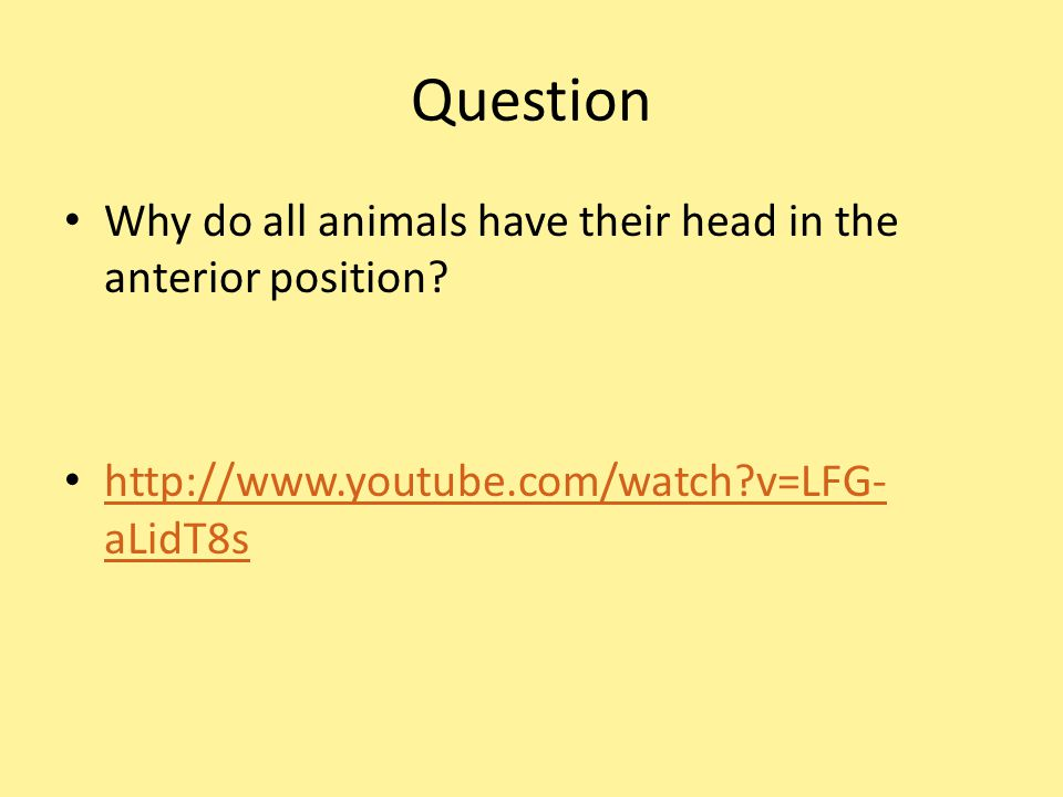 Question Why do all animals have their head in the anterior position