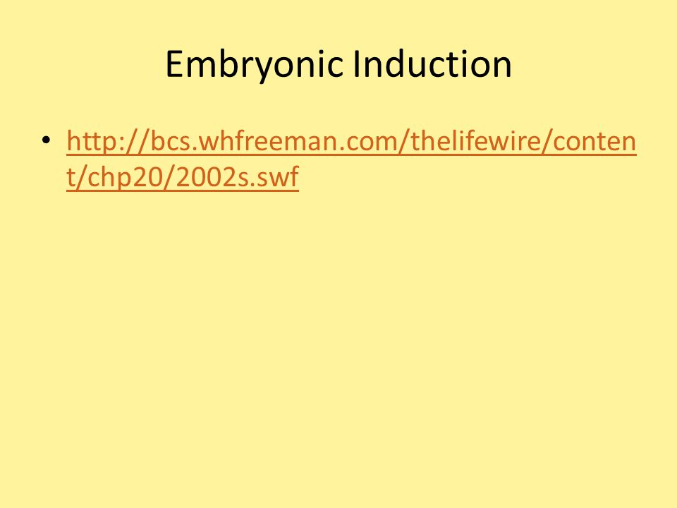 Embryonic Induction http://bcs.whfreeman.com/thelifewire/content/chp20/2002s.swf