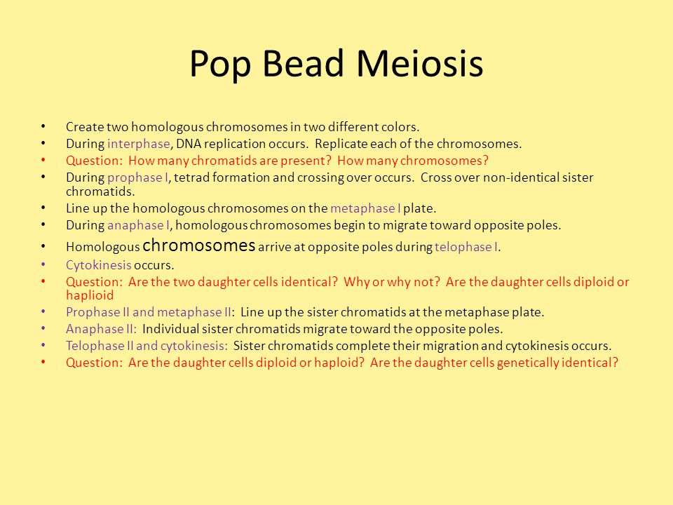Pop Bead Meiosis Create two homologous chromosomes in two different colors.