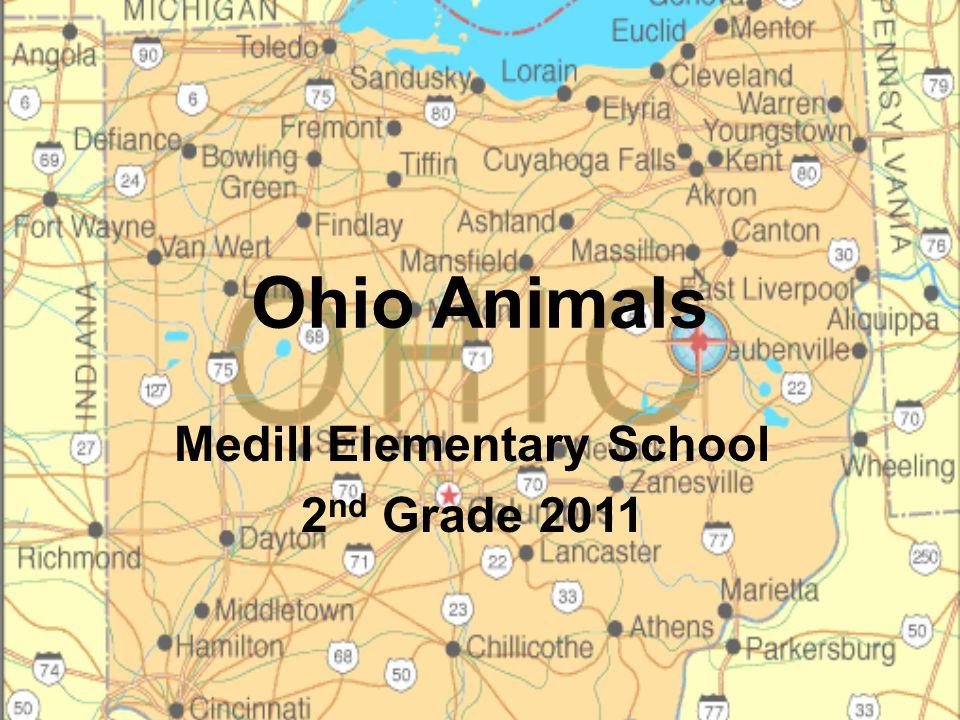 Medill Elementary School 2nd Grade 2011