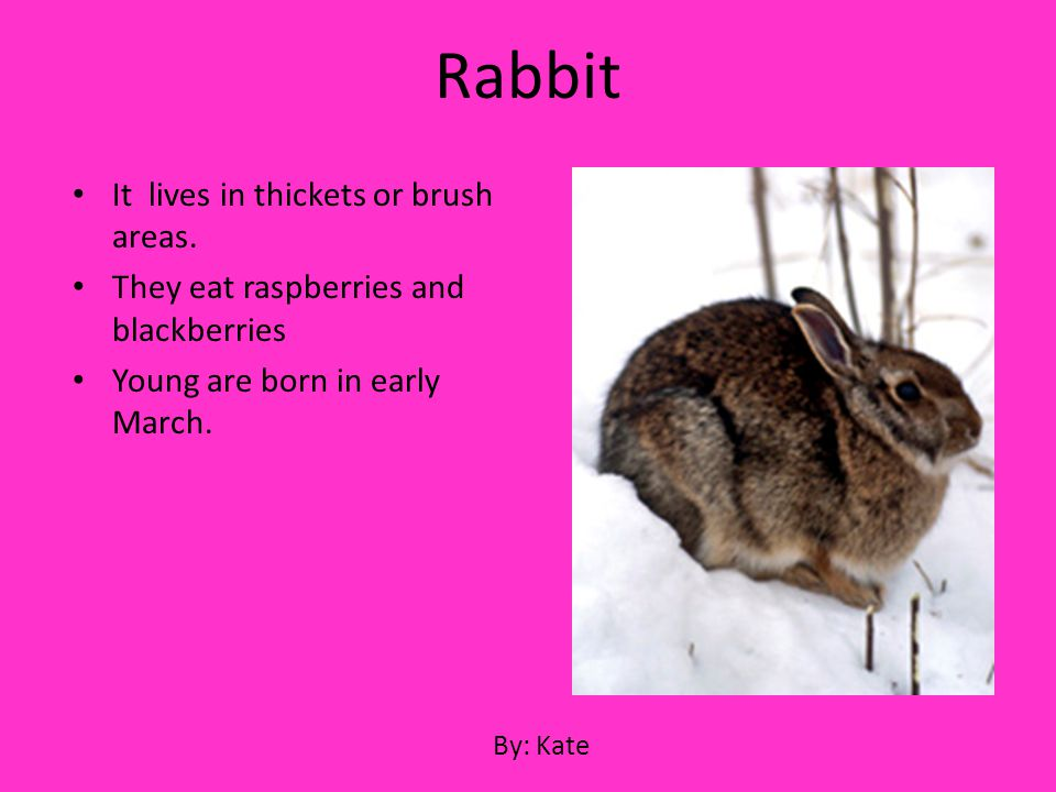 Rabbit It lives in thickets or brush areas.