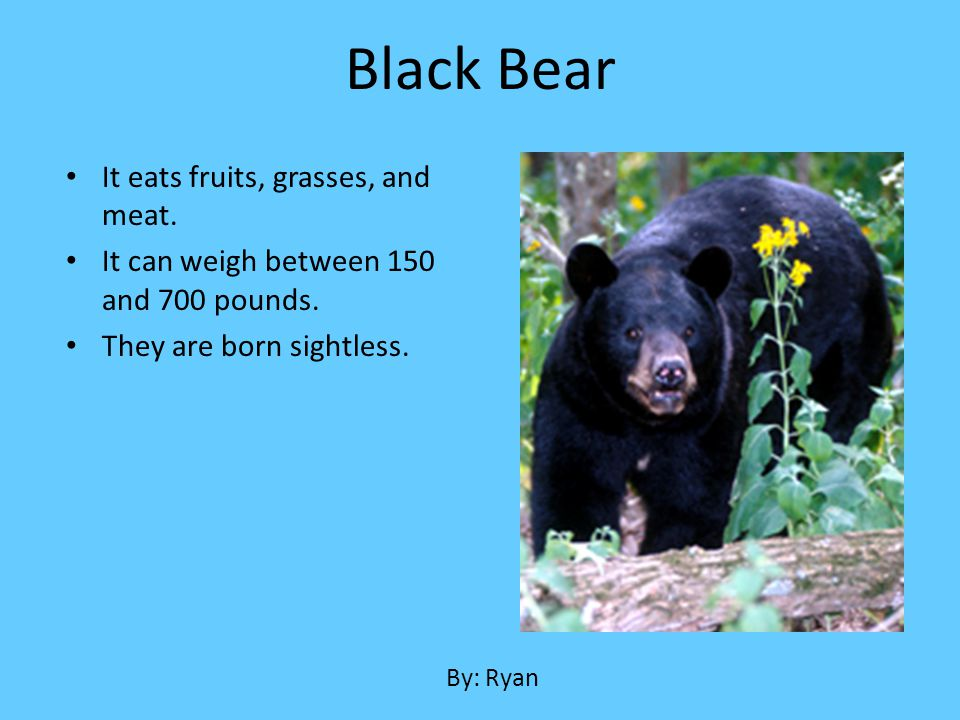 Black Bear It eats fruits, grasses, and meat.