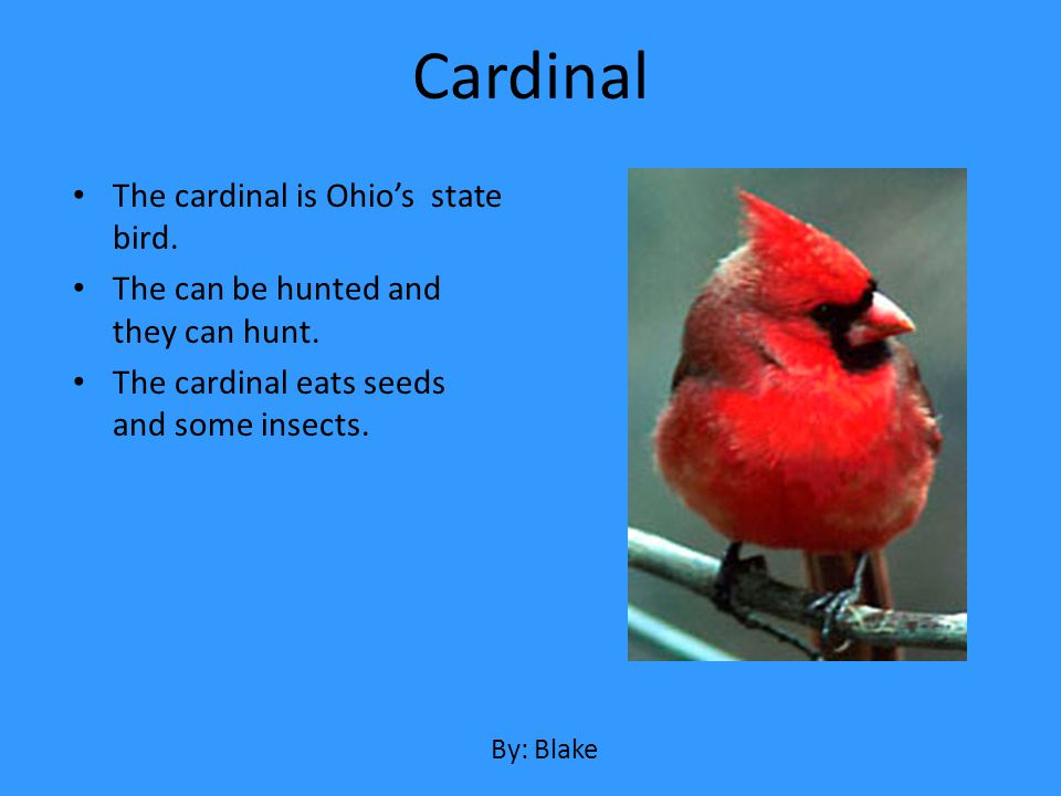 Cardinal The cardinal is Ohio's state bird.