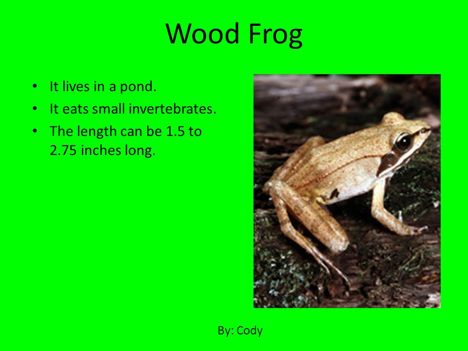 Wood Frog It lives in a pond. It eats small invertebrates.