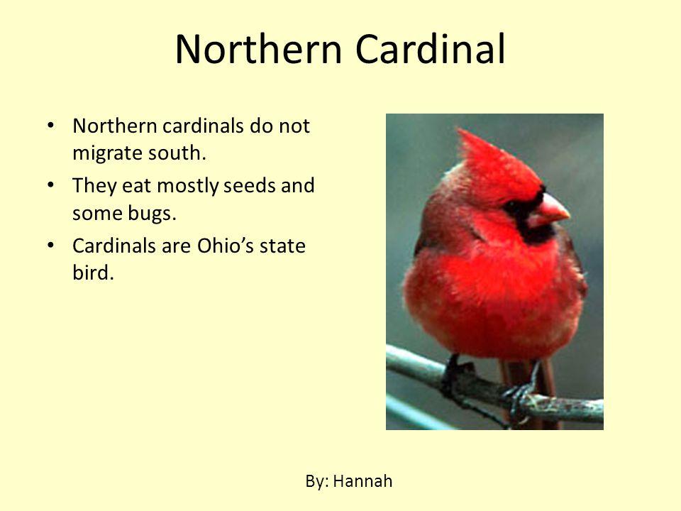 Northern Cardinal Northern cardinals do not migrate south.
