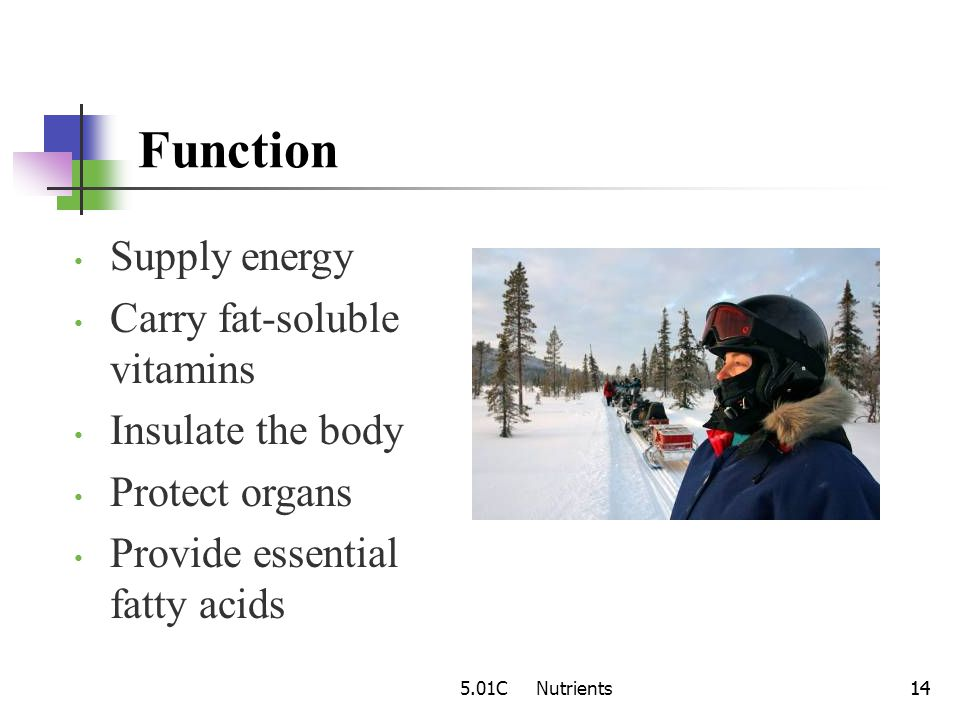 Function Supply energy Carry fat-soluble vitamins Insulate the body