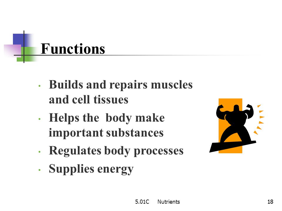 Functions Builds and repairs muscles and cell tissues