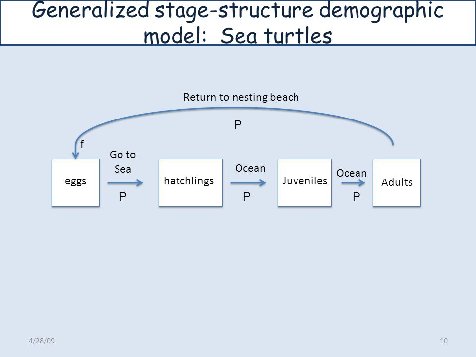 Generalized stage-structure demographic model: Sea turtles
