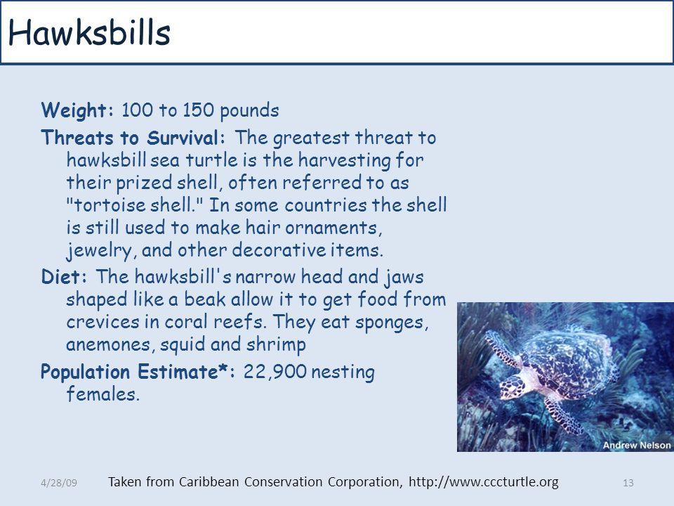 Hawksbills