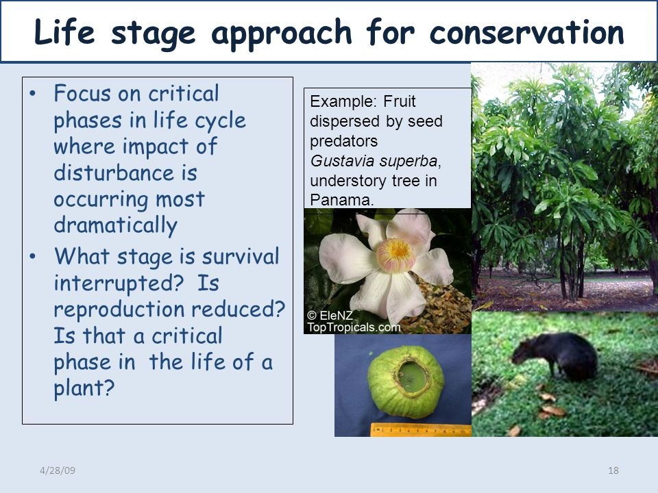 Life stage approach for conservation