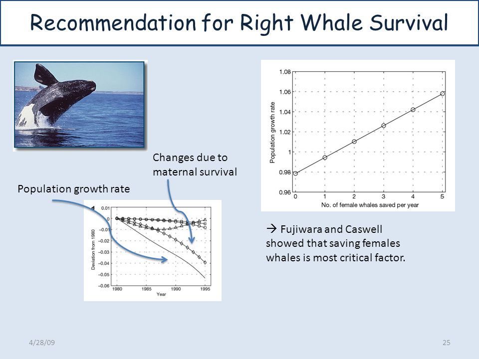 Recommendation for Right Whale Survival