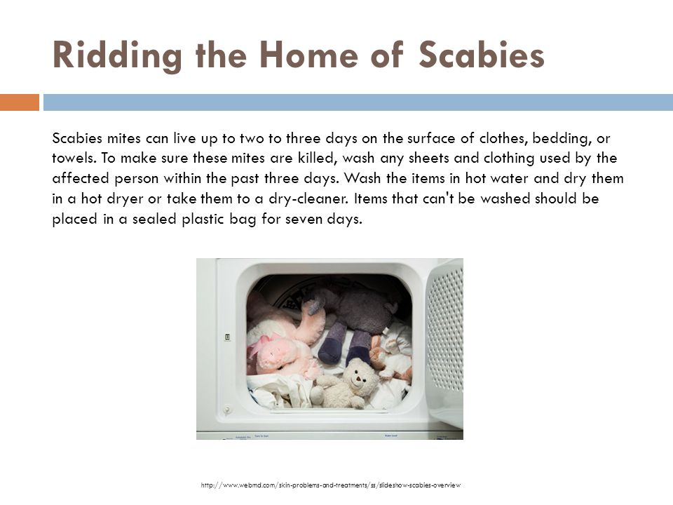 Ridding the Home of Scabies