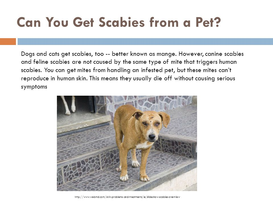 Can You Get Scabies from a Pet