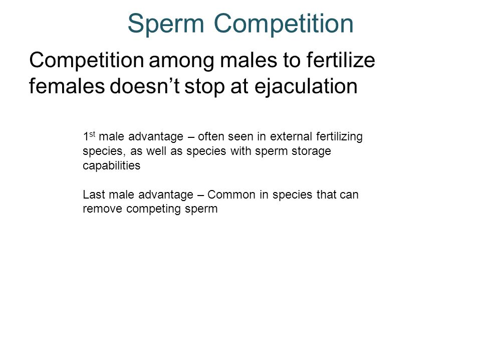 Sperm Competition Competition among males to fertilize females doesn't stop at ejaculation.
