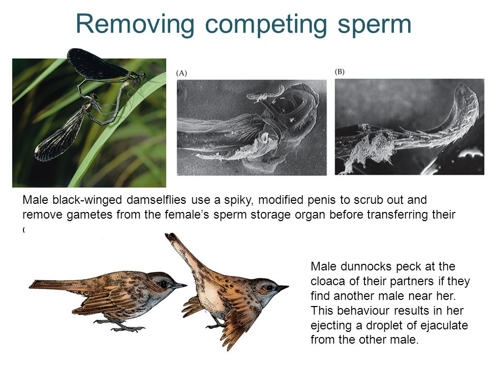 Removing competing sperm