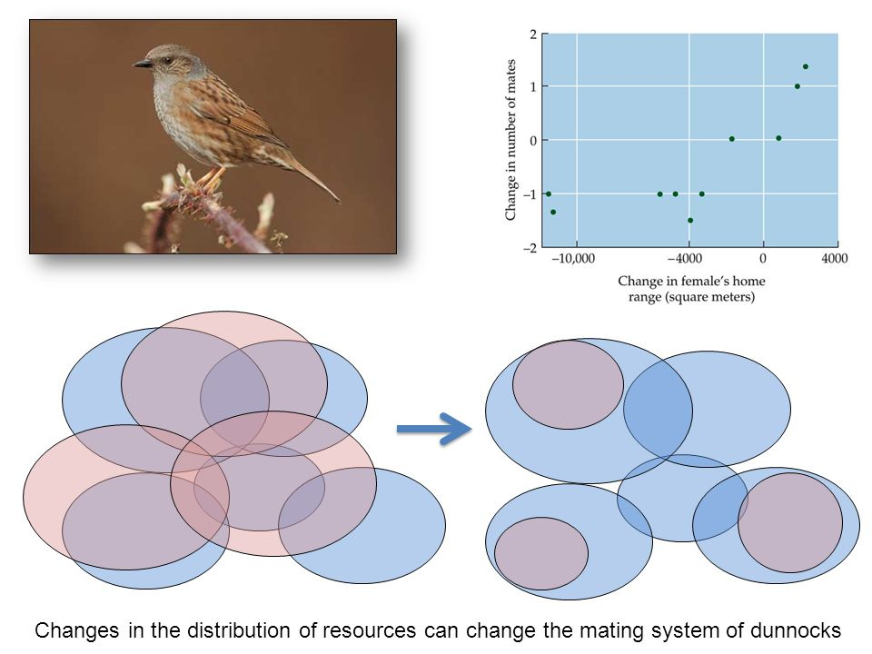 Changes in the distribution of resources can change the mating system of dunnocks