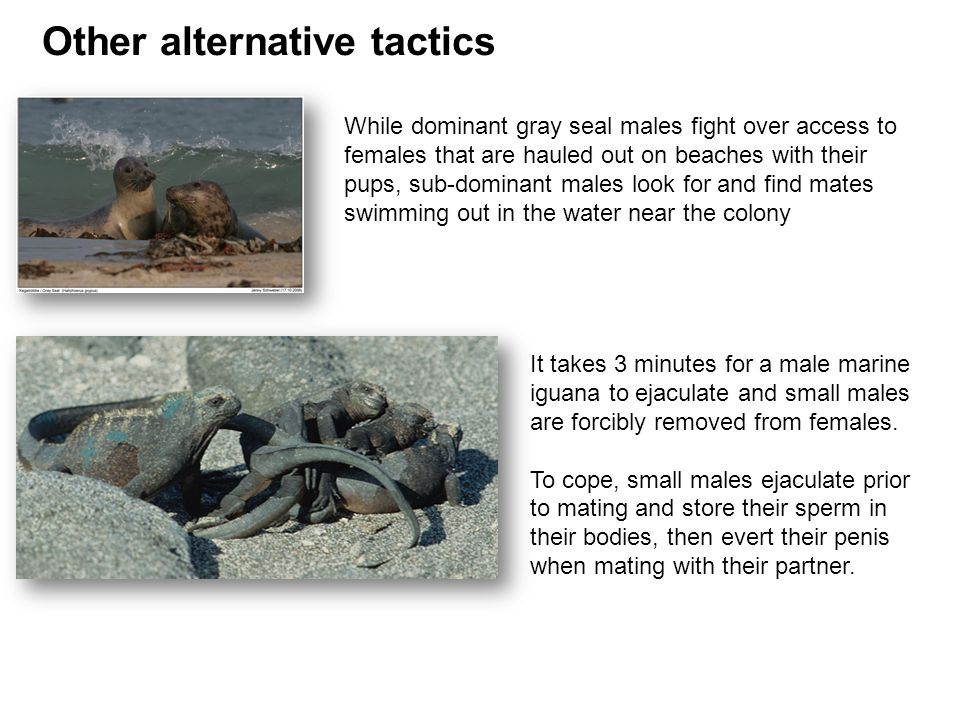 Other alternative tactics