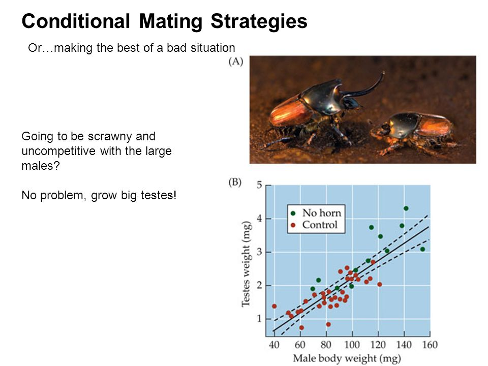 Conditional Mating Strategies