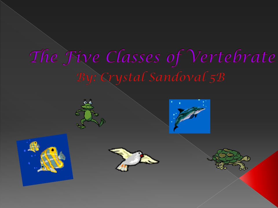 The Five Classes of Vertebrate