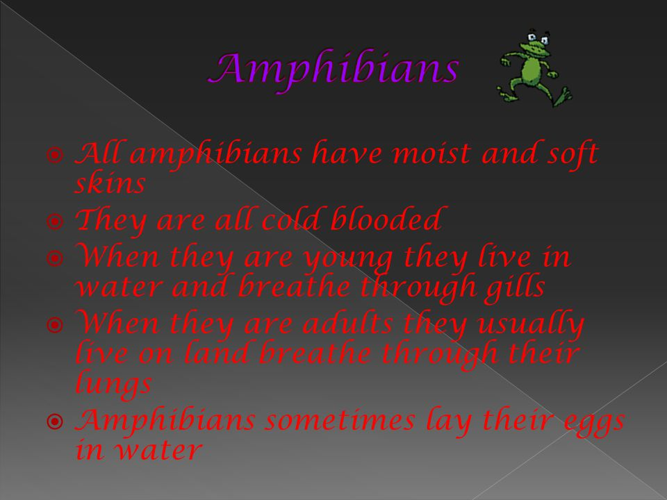Amphibians All amphibians have moist and soft skins
