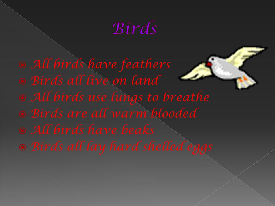 Birds All birds have feathers Birds all live on land