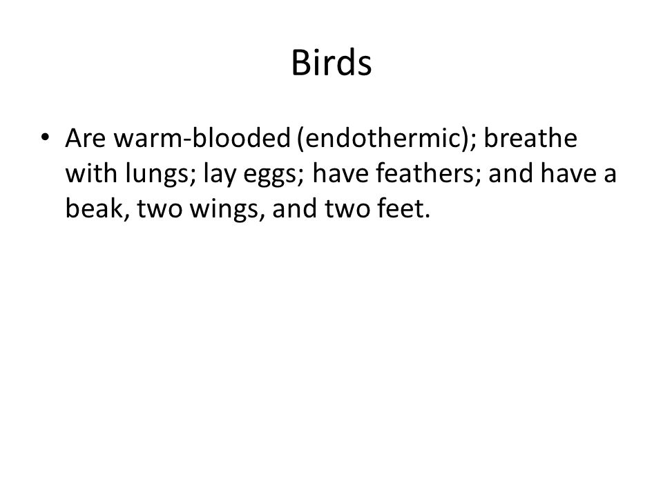 Birds Are warm-blooded (endothermic); breathe with lungs; lay eggs; have feathers; and have a beak, two wings, and two feet.