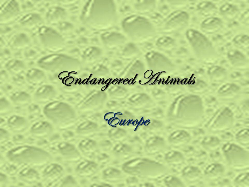 Endangered Animals Europe