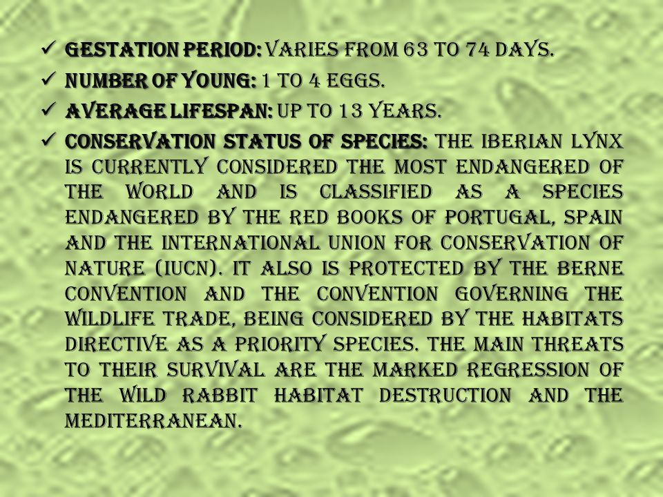 Gestation period: Varies from 63 to 74 days.