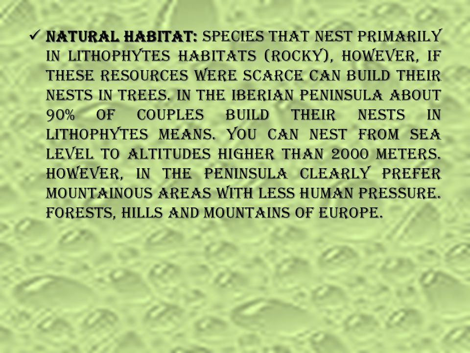 Natural habitat: Species that nest primarily in lithophytes habitats (rocky), however, if these resources were scarce can build their nests in trees.