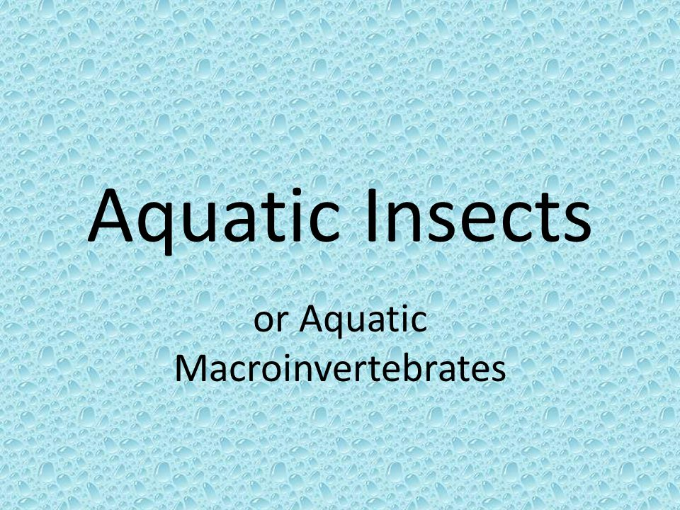 or Aquatic Macroinvertebrates