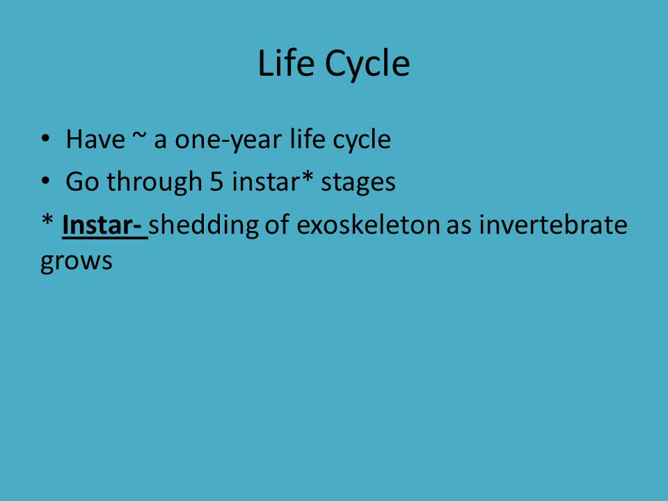 Life Cycle Have ~ a one-year life cycle Go through 5 instar* stages