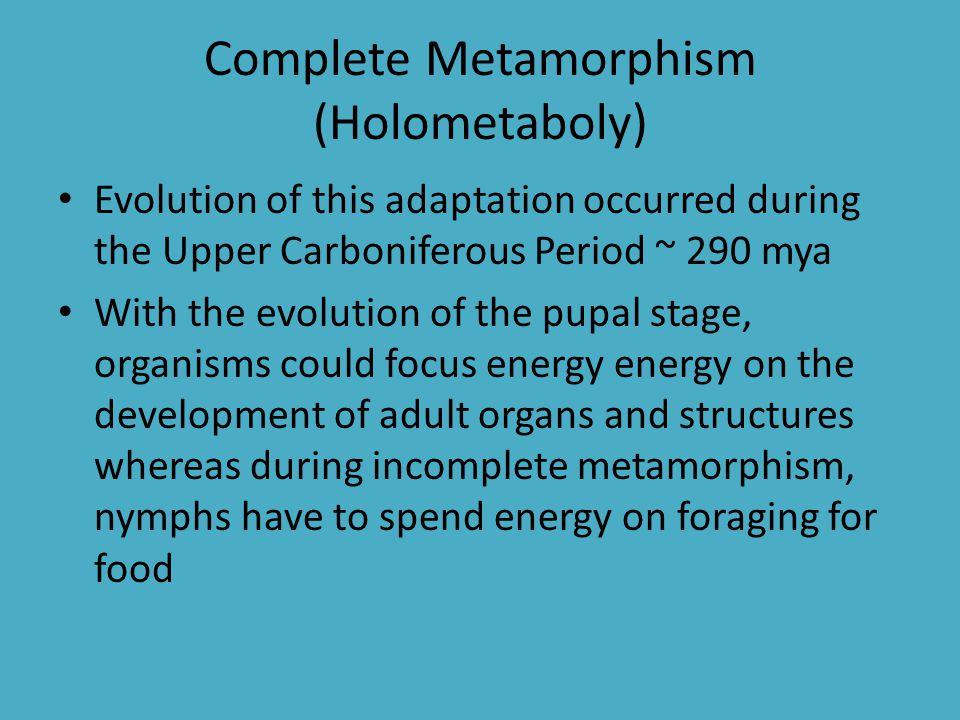 Complete Metamorphism (Holometaboly)