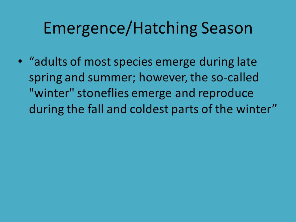 Emergence/Hatching Season
