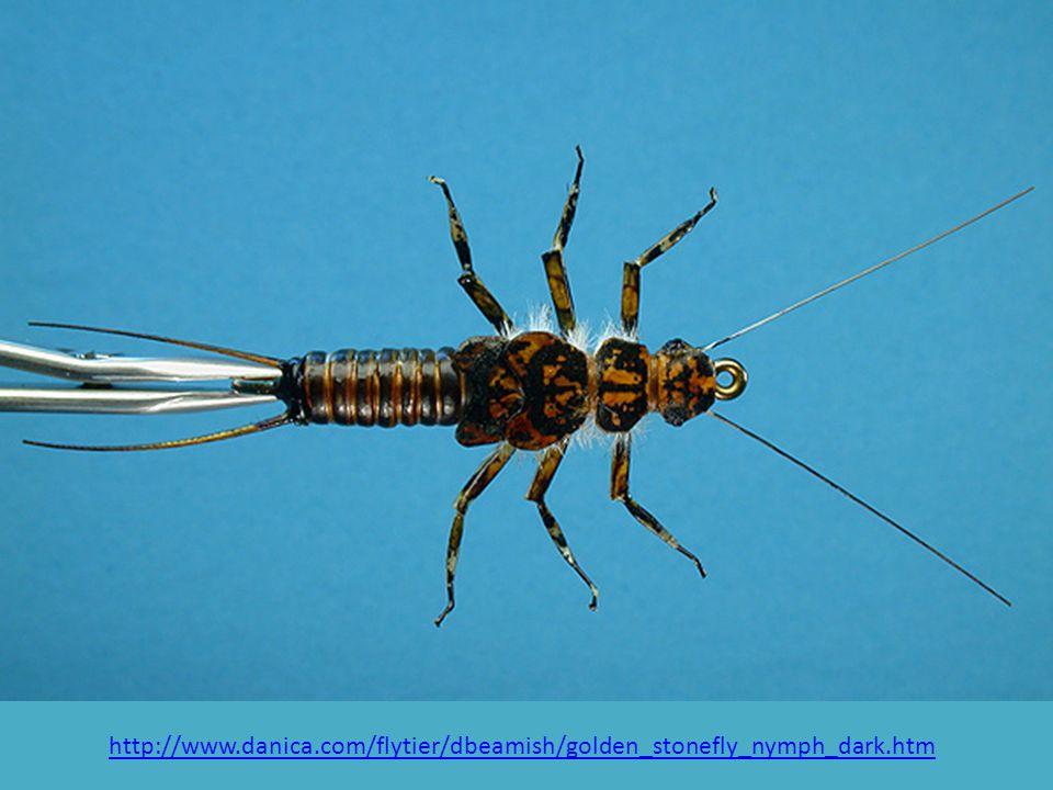 http://www. danica. com/flytier/dbeamish/golden_stonefly_nymph_dark