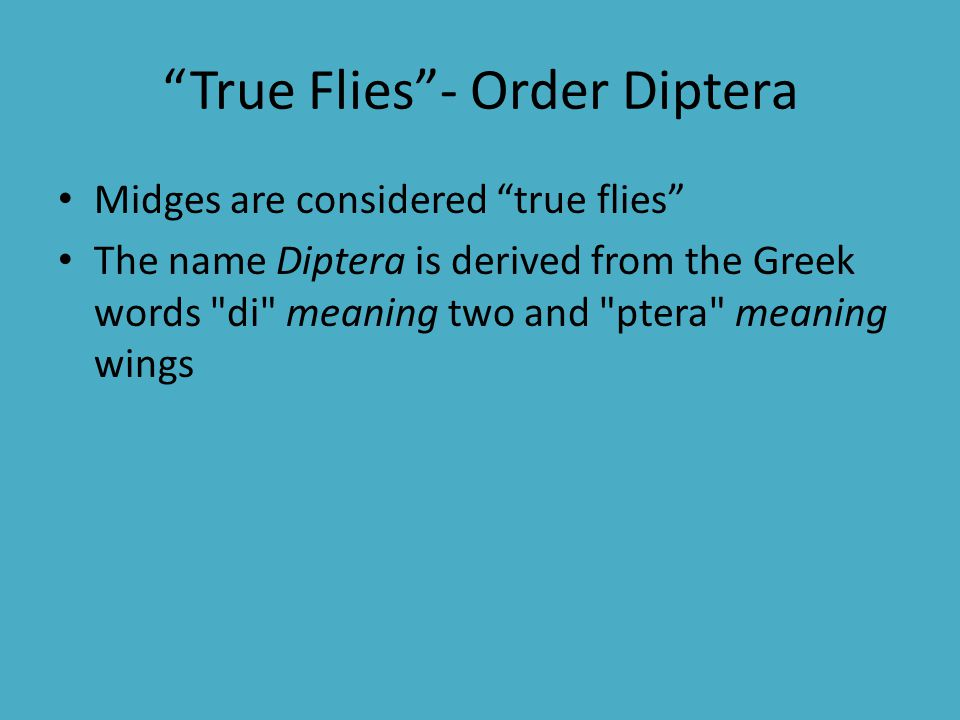 True Flies - Order Diptera