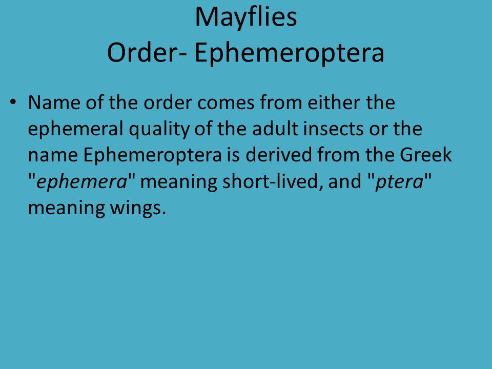 Mayflies Order- Ephemeroptera
