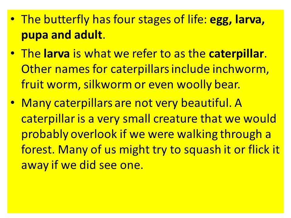 The butterfly has four stages of life: egg, larva, pupa and adult.