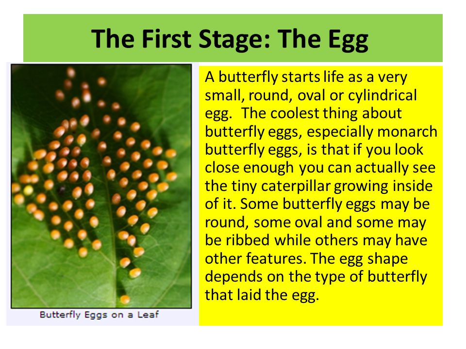 The First Stage: The Egg
