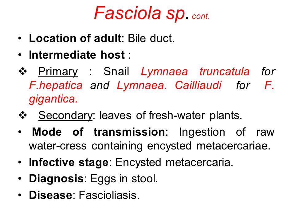 Fasciola sp. cont. Location of adult: Bile duct. Intermediate host :