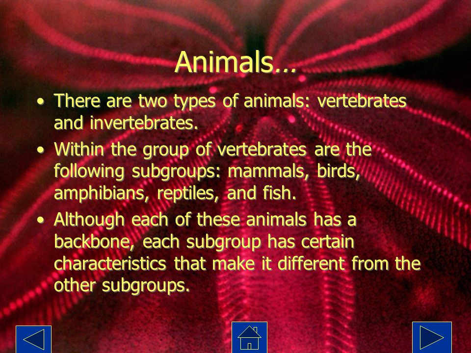 Animals… There are two types of animals: vertebrates and invertebrates.