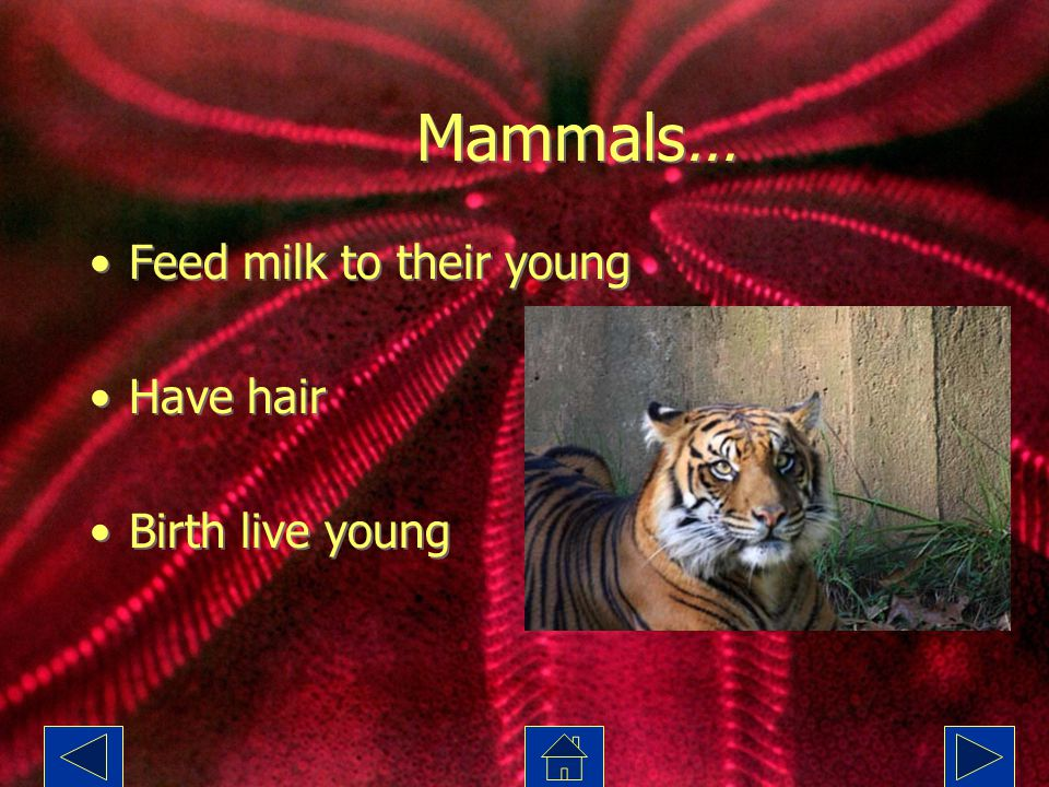 Mammals… Feed milk to their young Have hair Birth live young