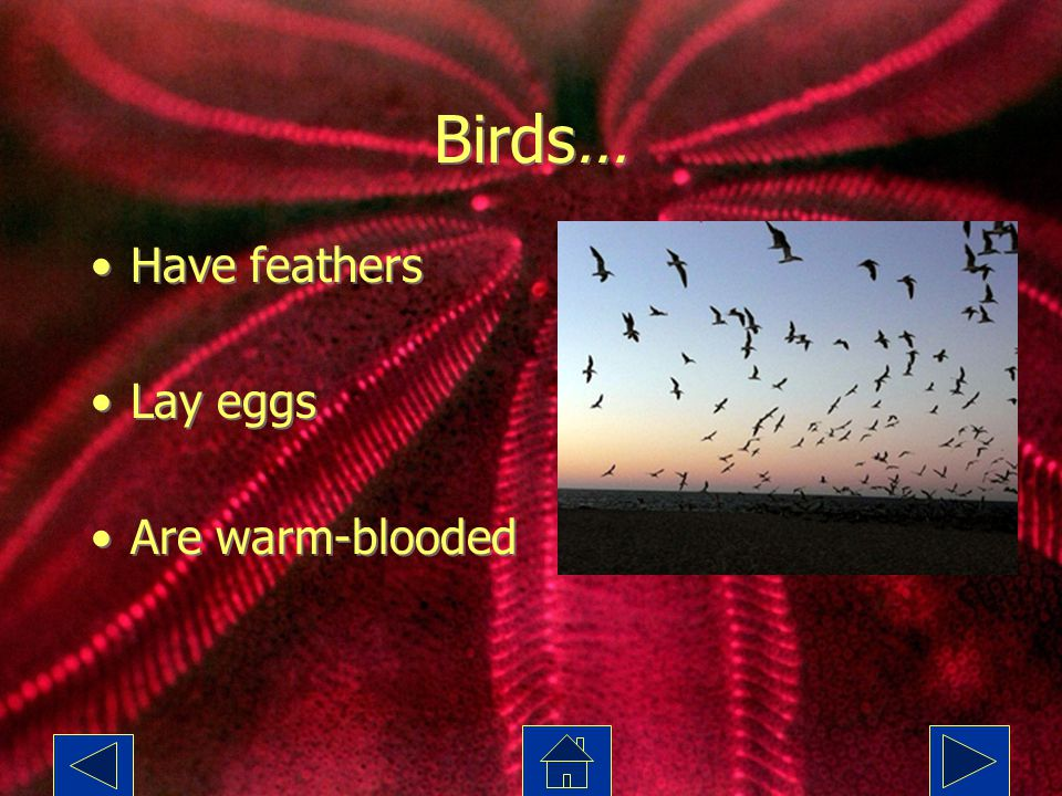 Birds… Have feathers Lay eggs Are warm-blooded