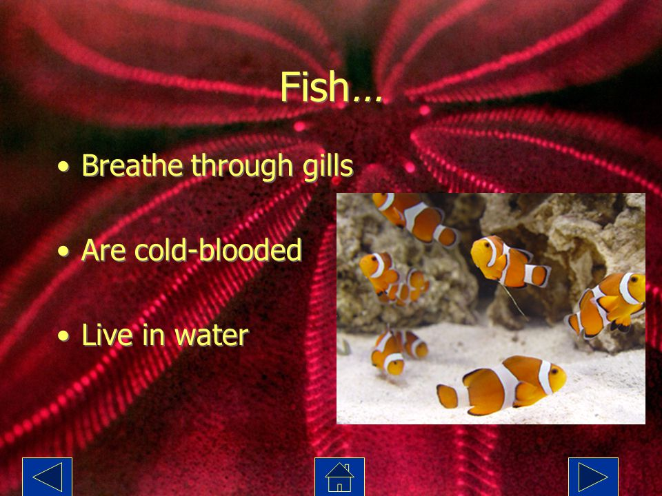 Fish… Breathe through gills Are cold-blooded Live in water